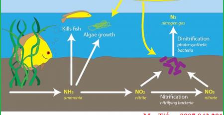 Ảnh hưởng của nồng độ ion Nitrit NO2- Nitrate NO3- ở trong nước và đất