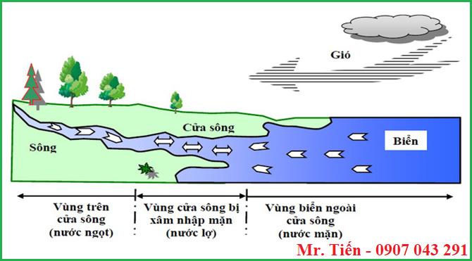 Độ muối mặn của nước thay đổi từ cửa sông đổ ra biển