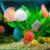 Tầm quan trọng của độ pH nước trong nuôi trồng thủy sản