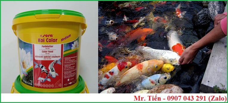 Thức ăn cao cấp dùng để tăng màu cho cá Koi hãng Sera