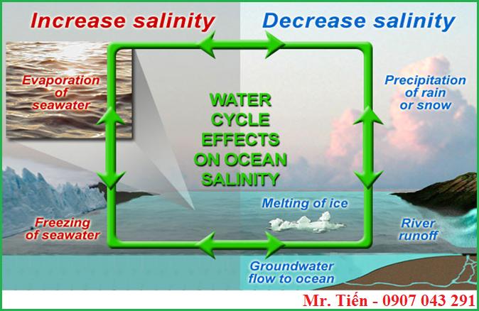 Vòng tuần hoàn nước ảnh hưởng đến độ mặn của nước biển
